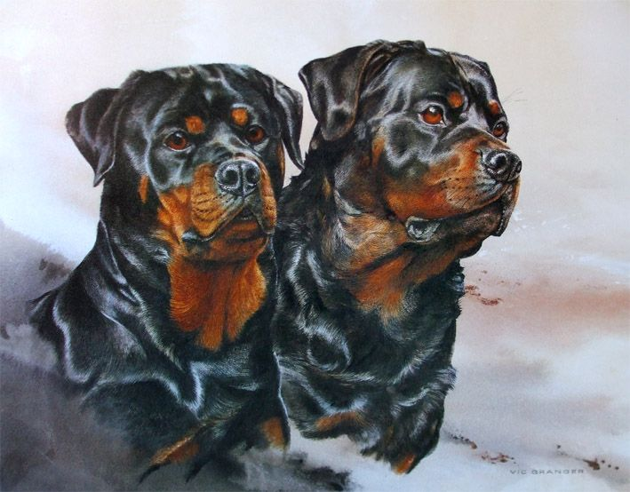 Rottweilers Limited Edition Print By Canine Artist Vic Granger
