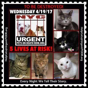 Help Us Save Nyc Ac C Shelter Cats Foster Cat Cat Adoption Cat Help