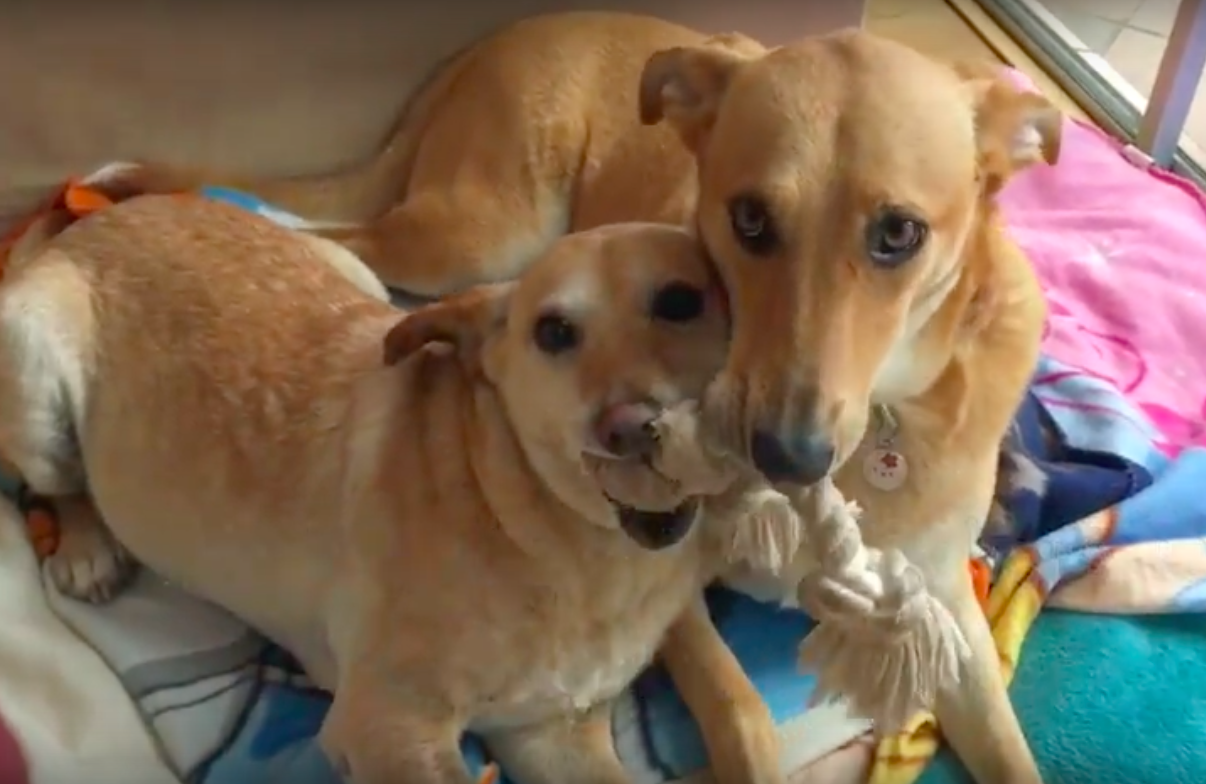 Vet Saves Dog From Euthanasia, Finds His Forever Home