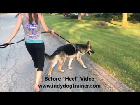 Dog Training Indianapolis For The Best Dog Trainer In Indy
