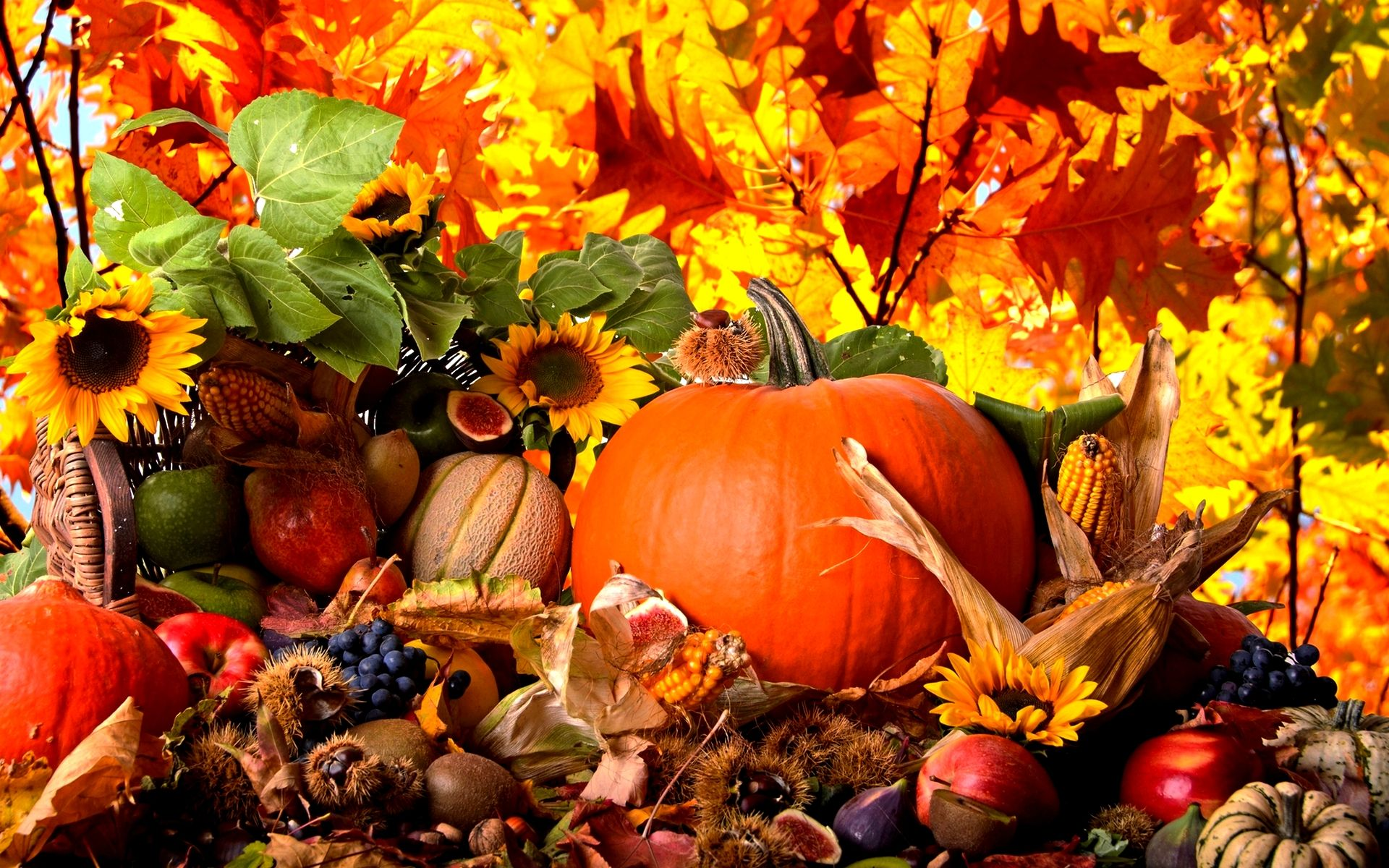 fall harvest full hd wallpaper high resolution wallpaper 1920x1200 px 1 73 mb