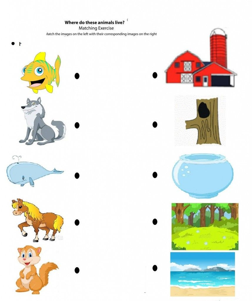medium resolution of free printable matching animals to their home worksheet (5)   January  preschool worksheets