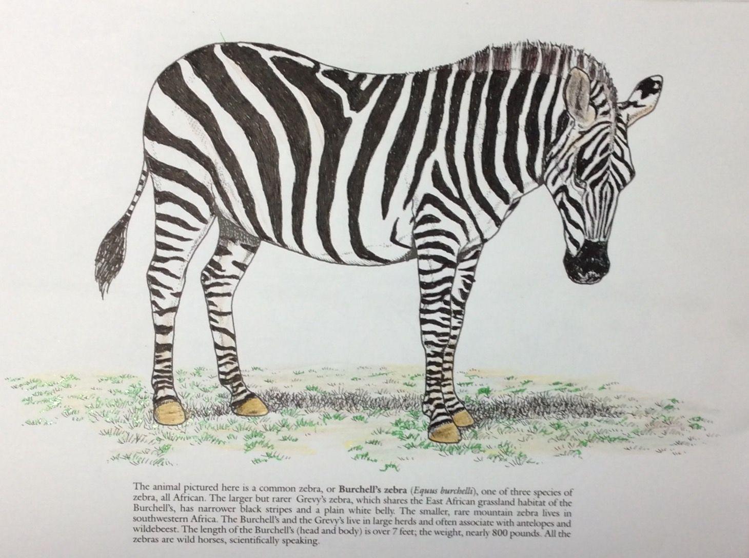 John Green Coloring Books Wild Animals