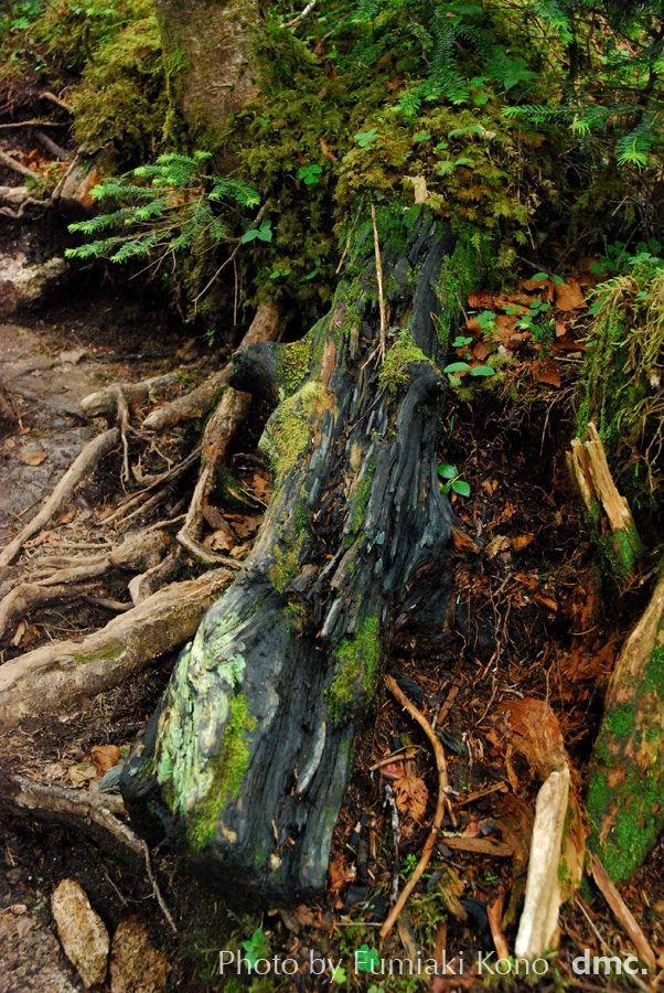 Decaying log blue