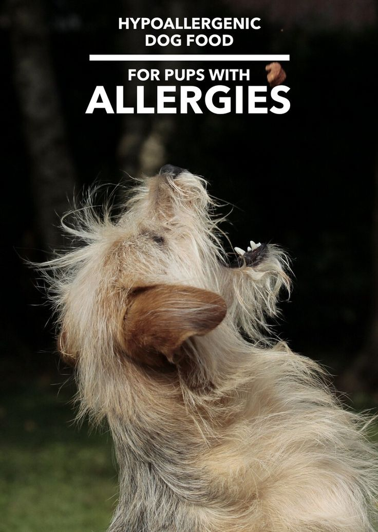 Hypoallergenic dog food dogs have allergies too hypoallergenic hypoallergenic dog food dogs have allergies too forumfinder Gallery