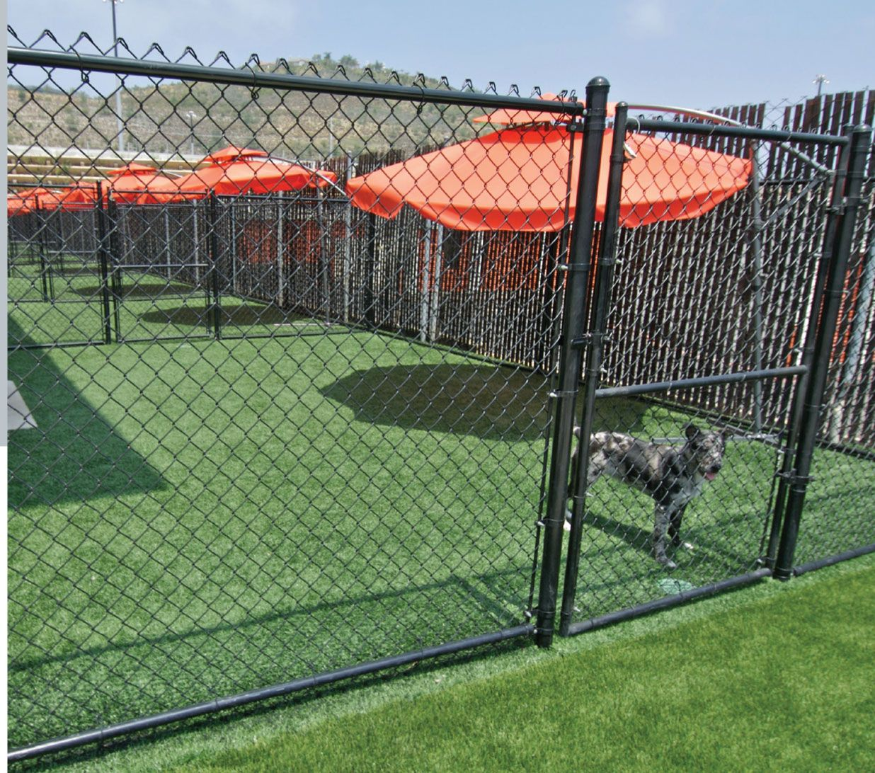 Artificial grass for dog boarding facilities dog for Boarding facility for dogs