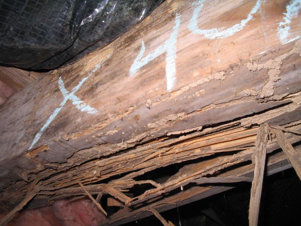 Fact termites cause more damage than fires and storms