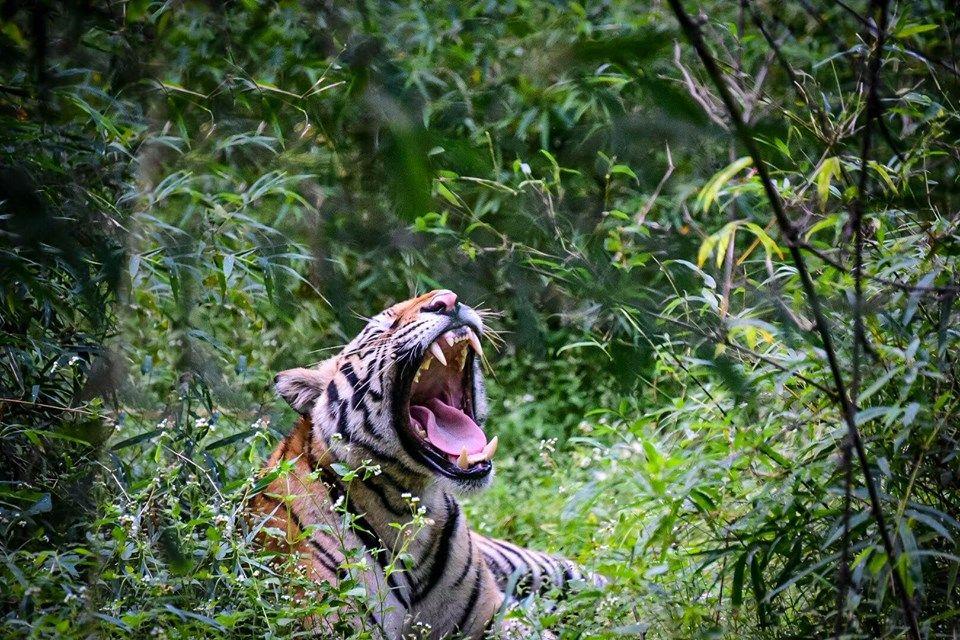 Pin by India Bird Watching on Tiger Safari Tour Wildlife