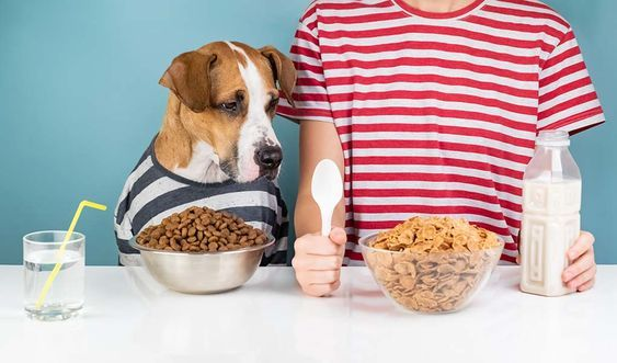 Dear Labby Why Doesn't My Dog Eat Without Me Foods dogs