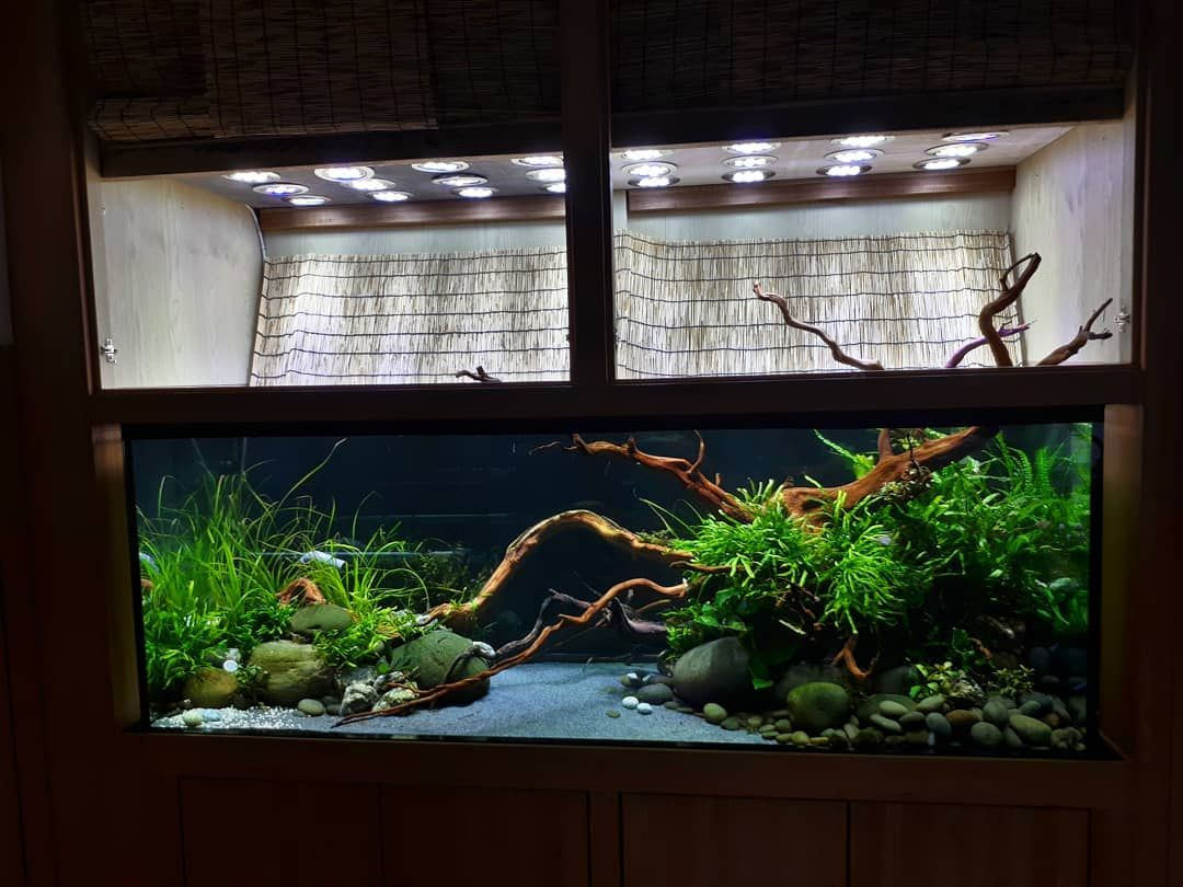 lượt thích bình luận greenbox design aquascapes