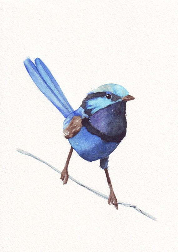 blue wren watercolor painting w066 print of watercolor painting 5 by 7 print wall art print. Black Bedroom Furniture Sets. Home Design Ideas