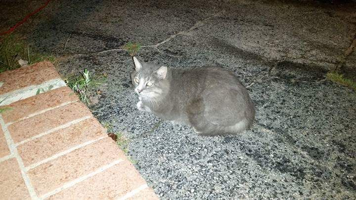 Jordyn Gulotta FOUND Killingly This cat has been hanging