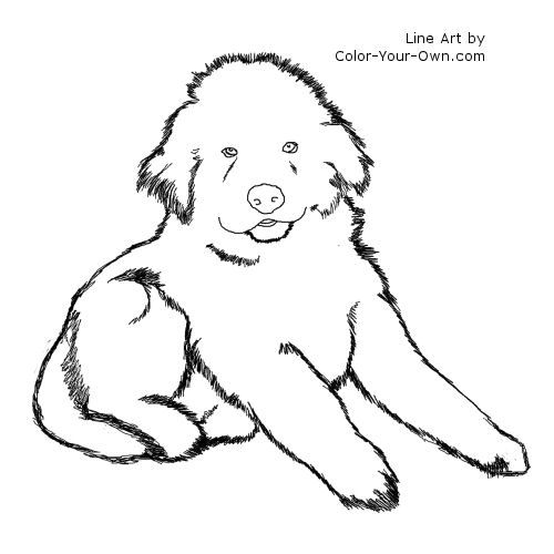 Newfoundland Puppy Line Art Dog Coloring Page Puppy Coloring