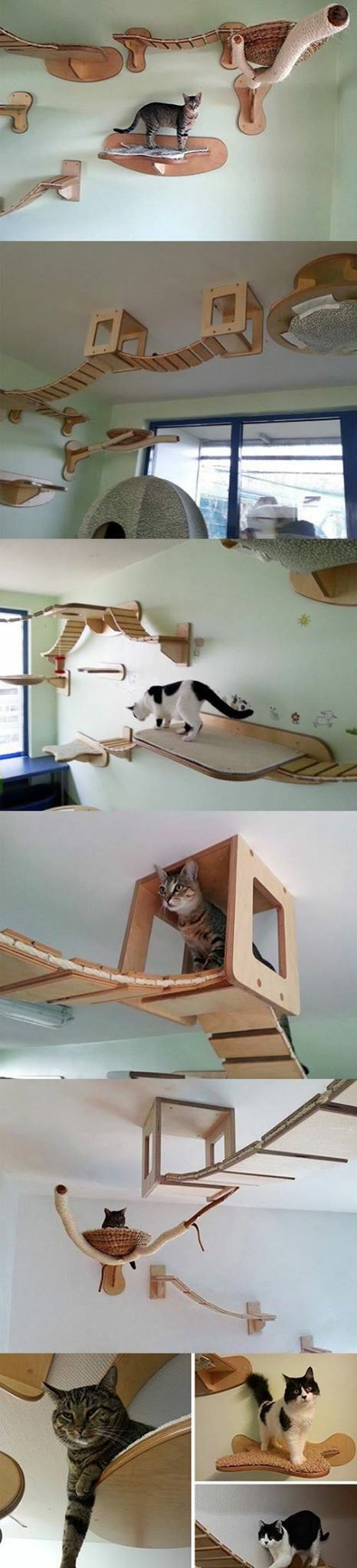 For cats an alternate path down the stairs stairways for cats an alternate path down the stairs stairways pinterest cat climbing wall cat and cat stairs amipublicfo Images