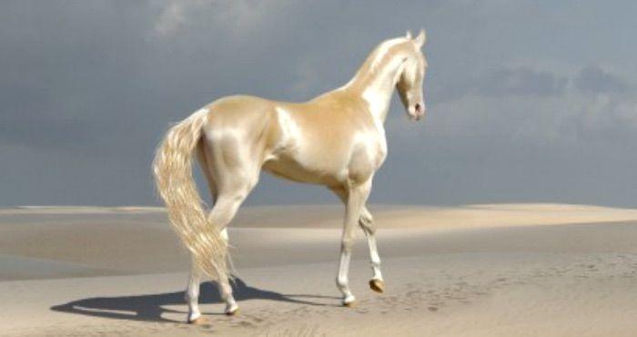 Dieses Seltene Wesen Nennen Die Menschen Das Schonste Pferd Der Welt Schonste Pferde Pferderassen Schone Pferde