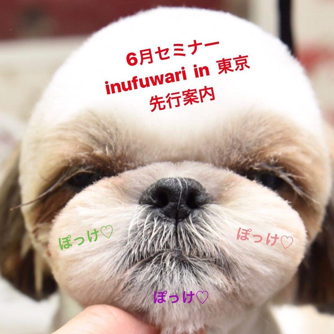 757 Otmetok Nravitsya 342 Kommentariev Inufuwari V Instagram 6月に東京でセミナーを予定しております 内容としては 1部トップノット小顔スタイル 2部オーソドックススタイル を6月10日or24日あたりで予定しております
