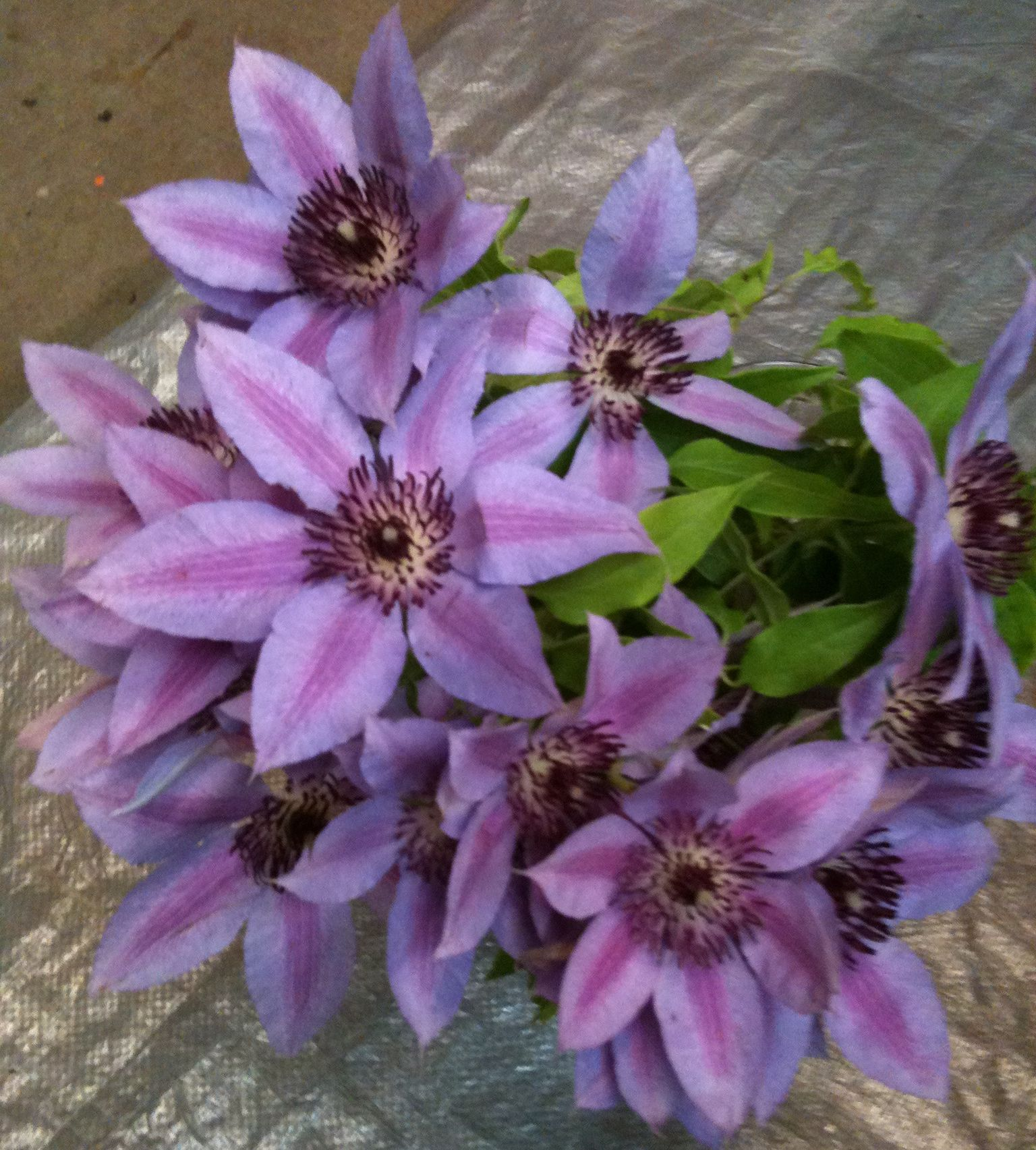 Clematis these are interesting my flower favs pinterest