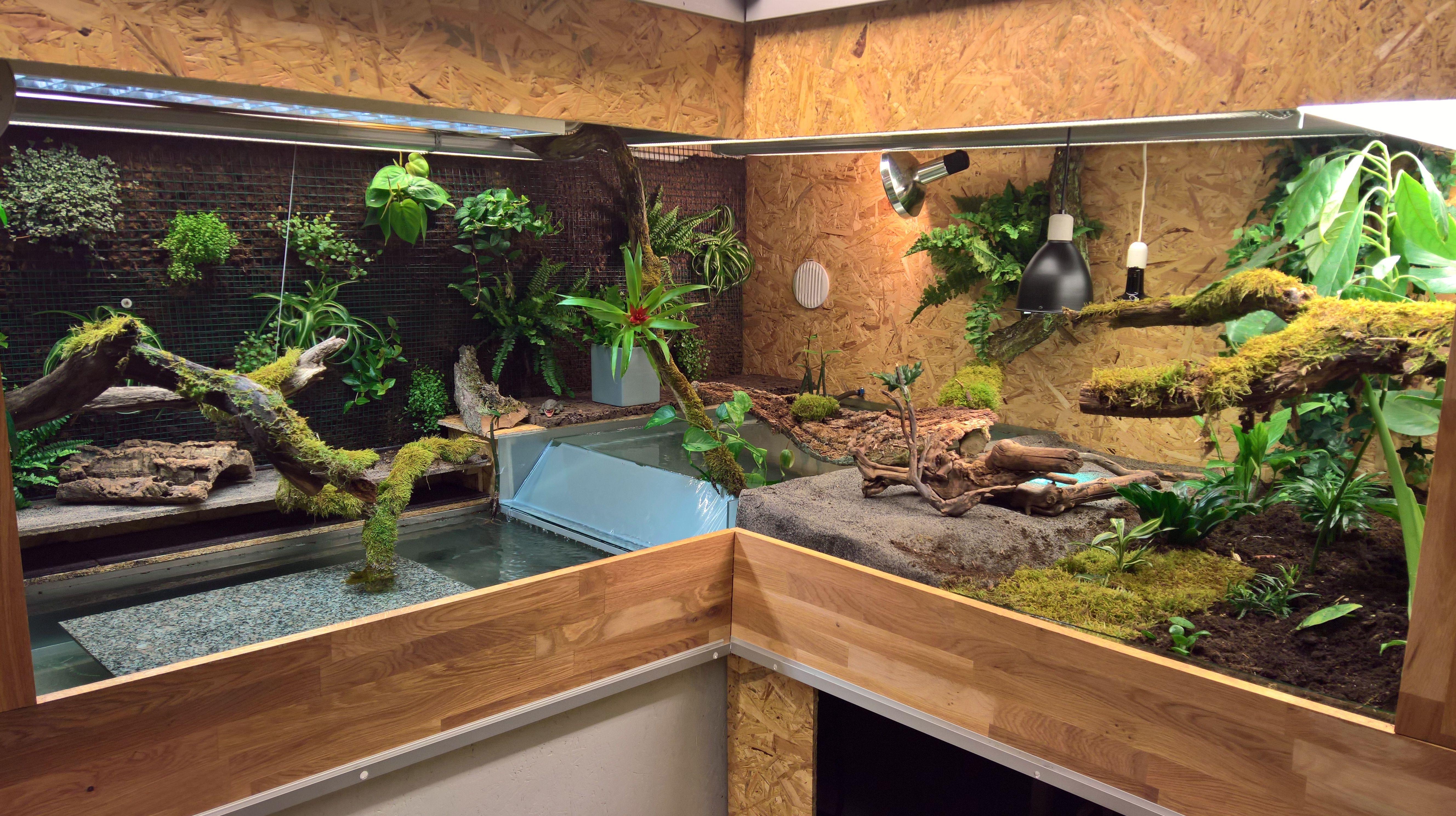 Caiman crocodilus enclosure glasögonkajman terrarium croc