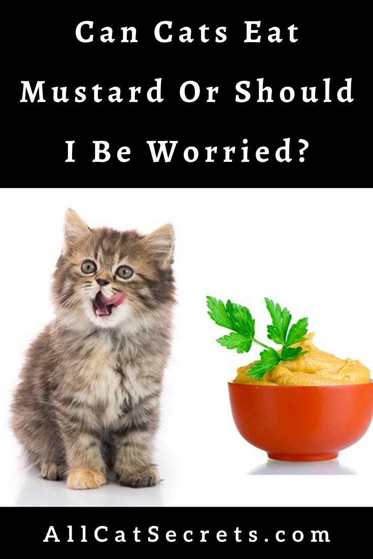 Can Cats Eat Mustard Or Should I Be Worried Cats Cat Questions Cats And Kittens