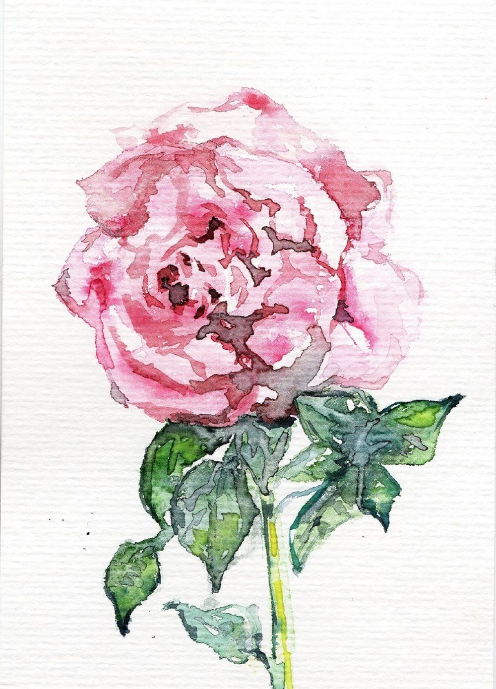 Aquarelle Originale Botanique Fleur Rose Art Carte Postale