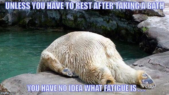 Tired Bear With Images Funny Animal Pictures Polar Bear Animals