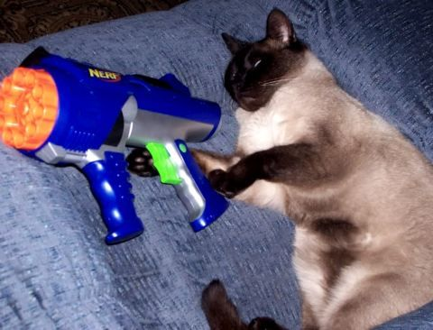 Funny Cat With Gun Animation | www.pixshark.com - Images ...