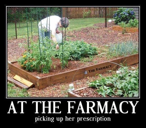 Grow your own and be healthier as a result
