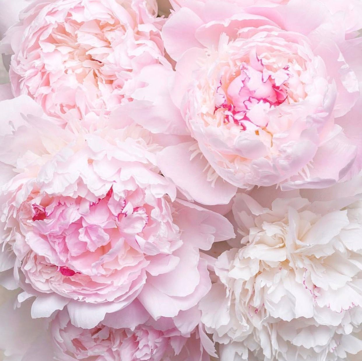Pin by Michelle Joiner on flowers Pretty flowers