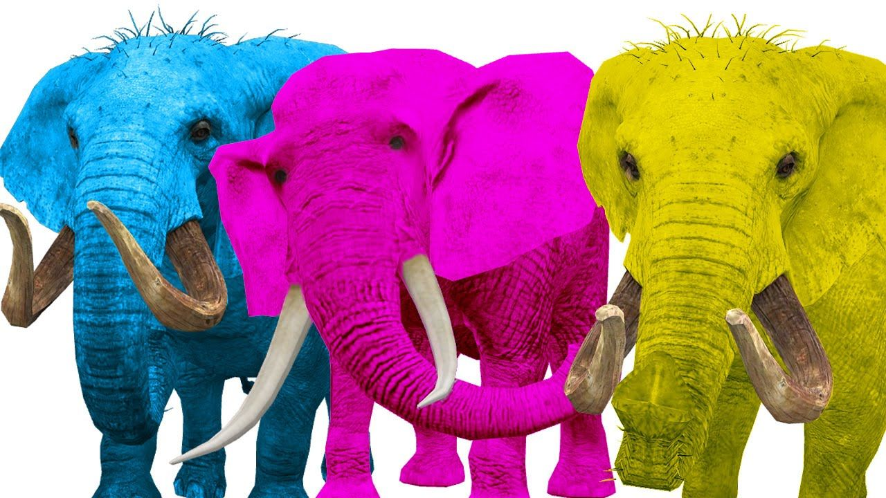 crazy elephant singing finger family rhymes colors song elephant vs