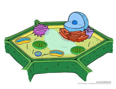 9fbf2ab87b7738783df27e9c0fc6d5a4 plant cell diagram unlabeled science printables pinterest