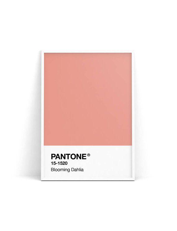 pantone pink pantone
