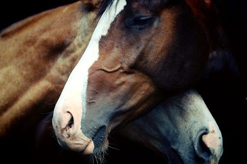 Love The Mood This Sets Horses Horse Love Pretty Horses