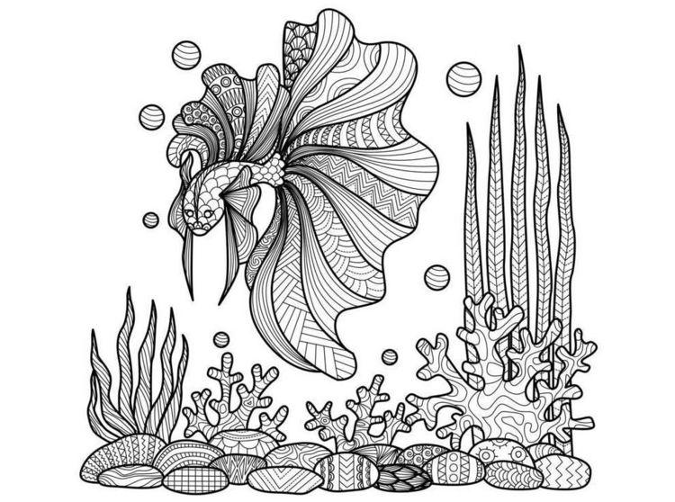 zentangle vorlagen unterwasserwelt-fisch-beta-aquarium
