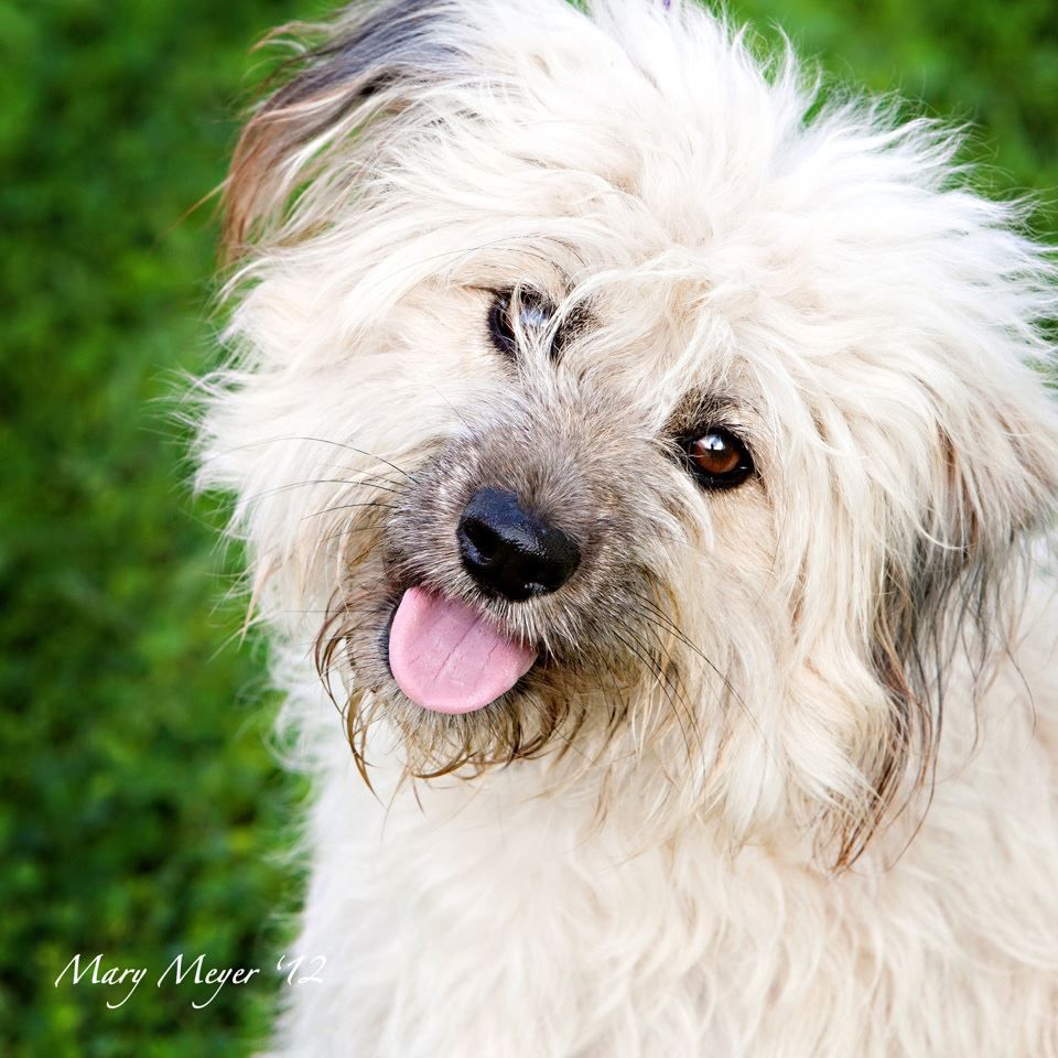 """This cutie is """"Baxter"""". His lineage is a mystery…we see"""