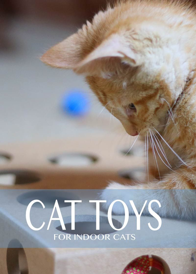 Guide To Cat Toys For Indoor Cats By Cat Site Cat Toys