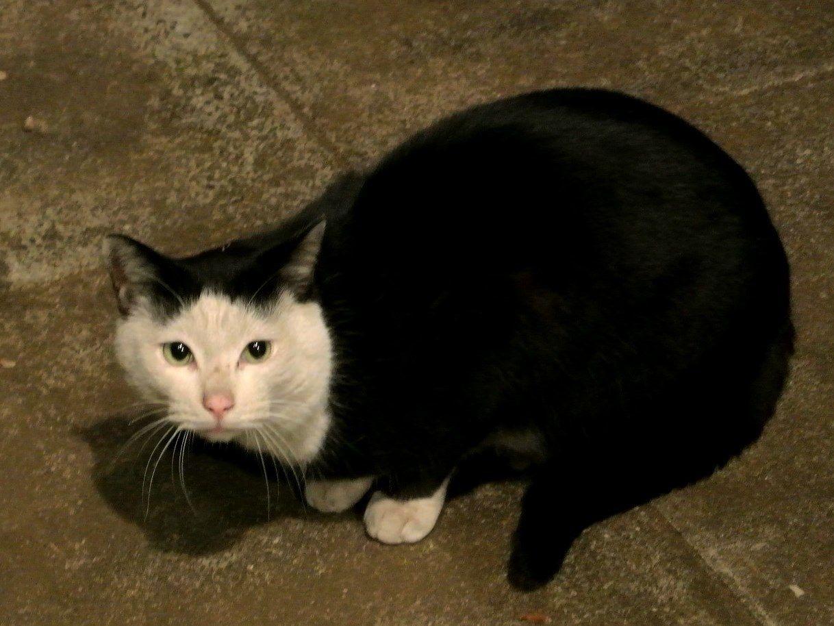 【待望の第2弾】なんでみんなに笑われるんだろう?奇跡の模様が入った猫の写真15選