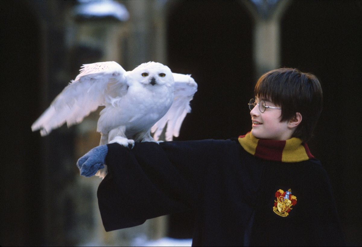 Harry Potter With Hedwig Harry Potter Hedwig Harry Potter Pictures Harry Potter Images