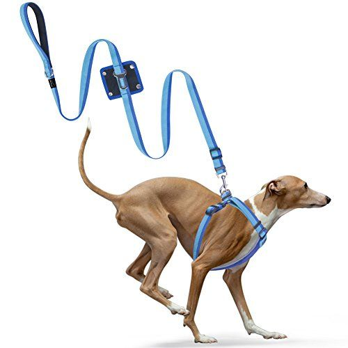 No Pull Dog Harness Leash Set Petbaba No Escape Reflective Seat