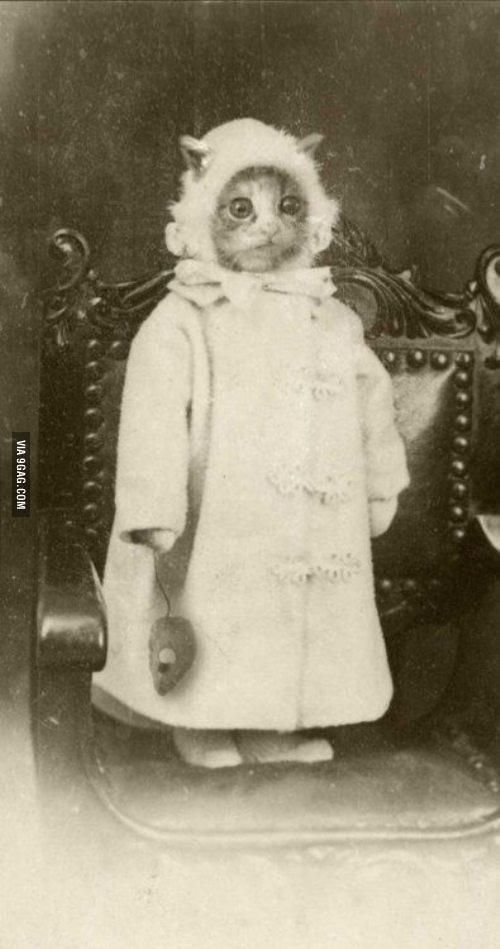 Weird vintage cat picture. makes me question the sanity of our ancestors.