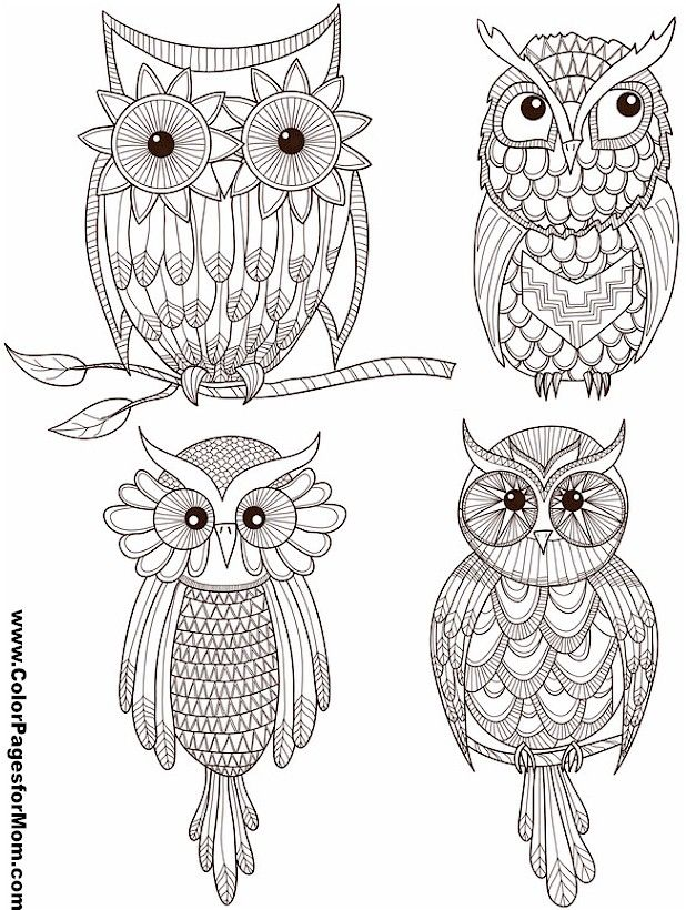 Best Owl Coloring Pages For Adults