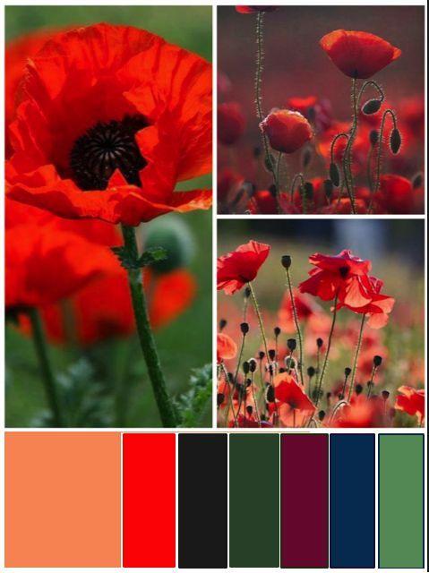 esempi di colore