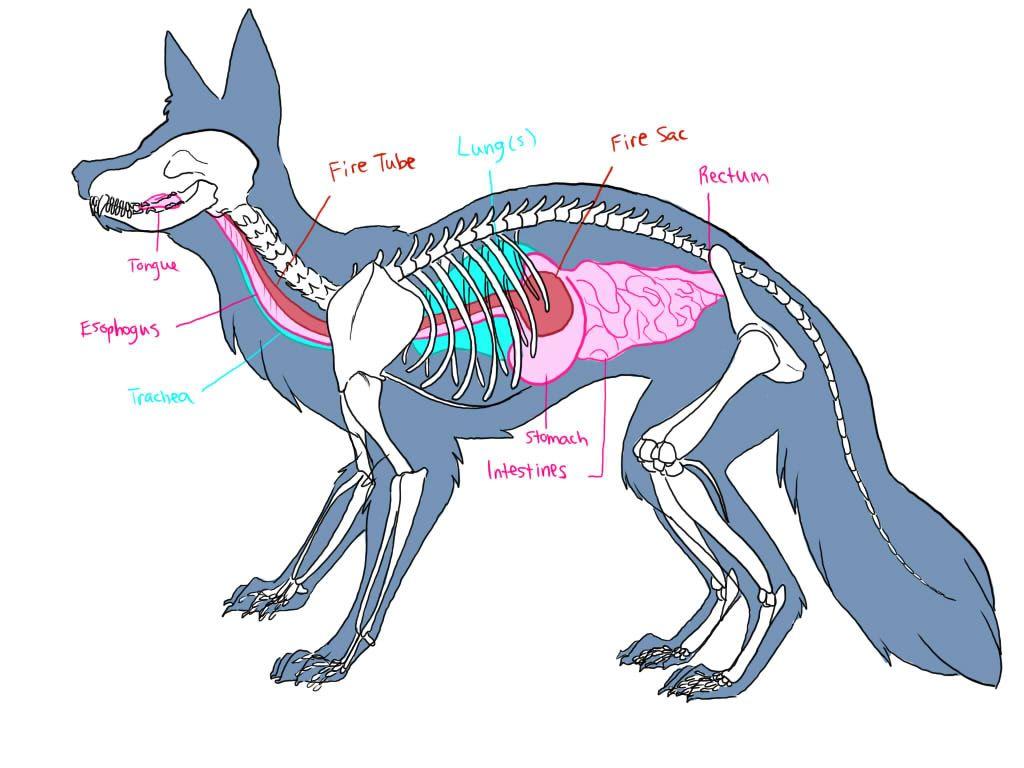 Vulpis Velox | Album Zine | Pinterest | Foxes, Anatomy and Animal ...