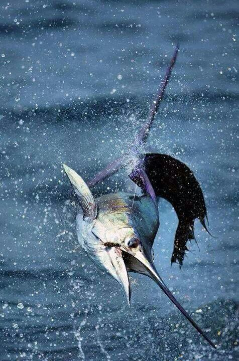 The saltwater hook up