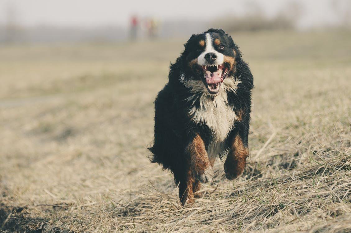 Pin by chris on dog exercise training your dog dog