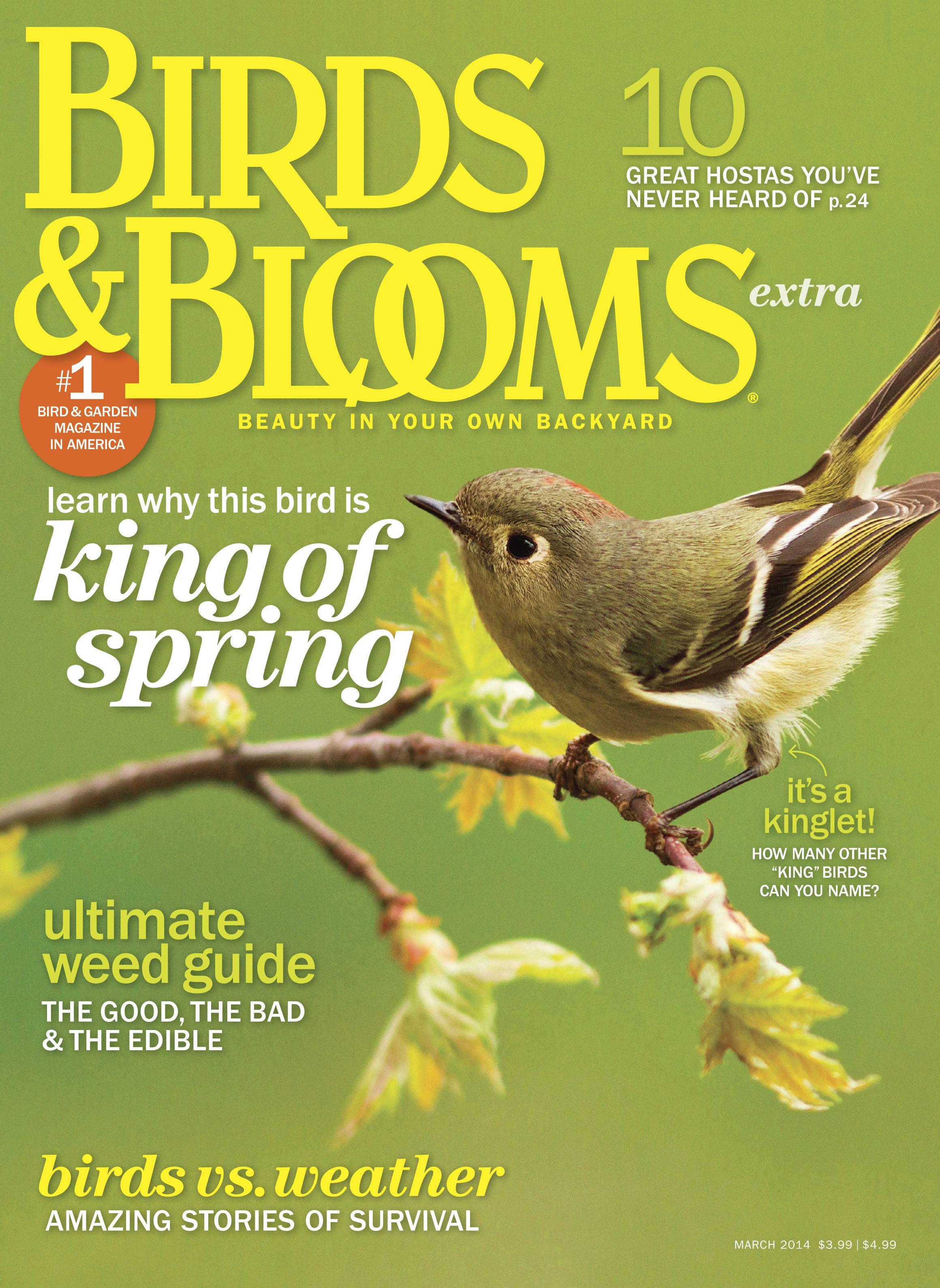 March 2014 Birds Blooms Extra Birdsandblooms Com How To