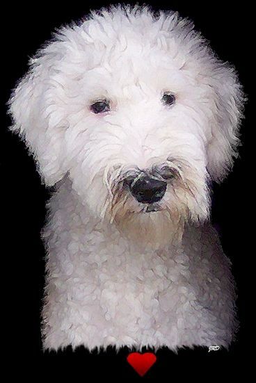 Until You Find Me Info On Oes Home Haircuts Old English Sheepdog English Sheepdog Sheepdog