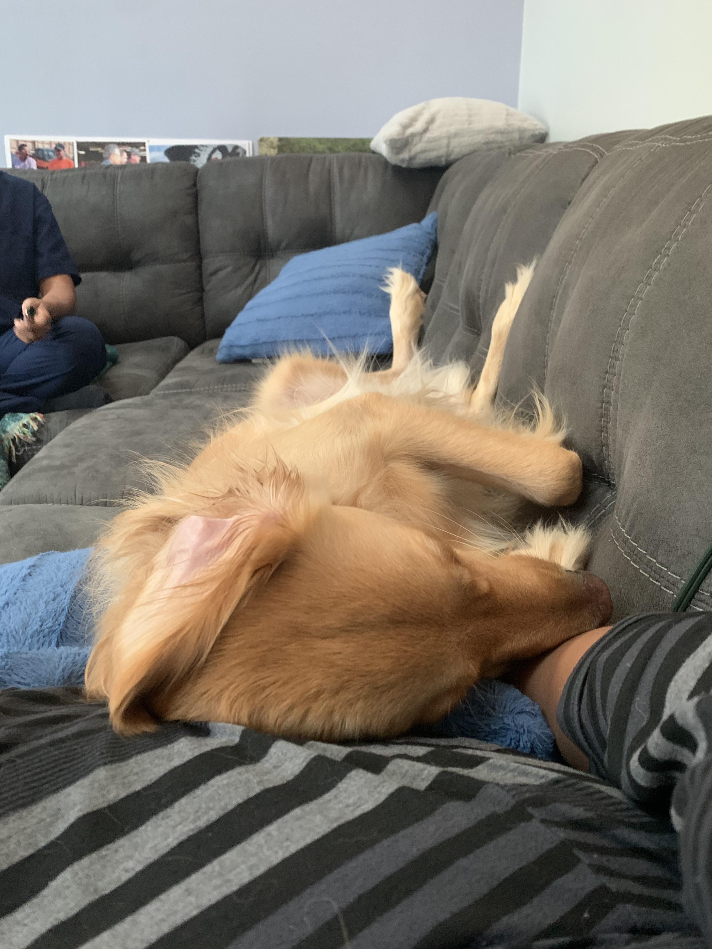 He sleeps like a human Cute baby animals, Cute animals