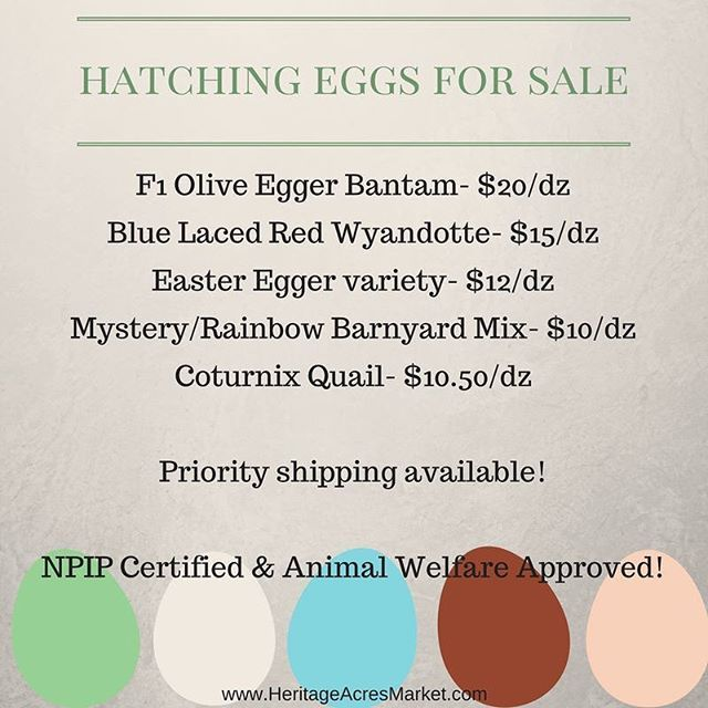 Hatching eggs for sale! NPIP certified, shipping available! I apologize for my silence here lately. We have been working sun up to sun down on some big projects and little ones too. Photos to follow soon. Please let us know if you are interested in hatchi
