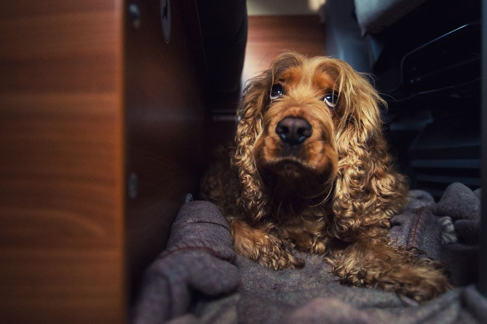 7 Dog Accessories You Cant Travel Without Gotta Have Pet Travel