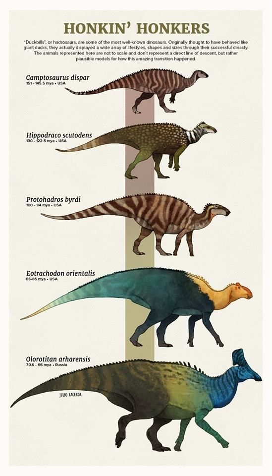 Tumblr Artist, PaleoArt, Creates Beautiful Animal Evolution Series (22 Species) #prehistoricanimals